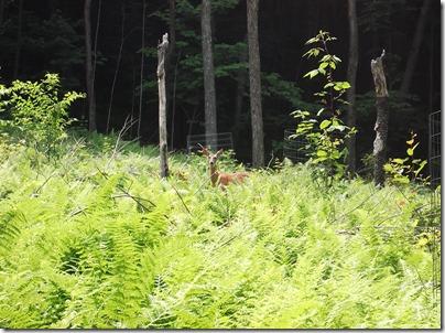 Deer at Rider Park